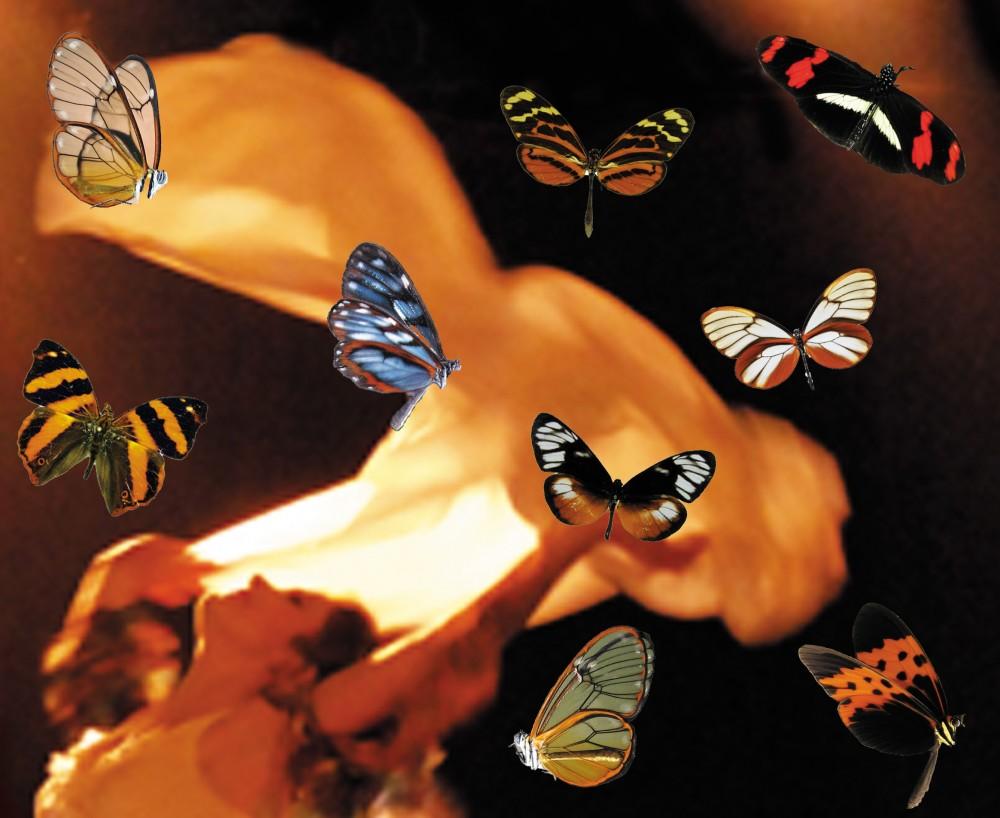 Couleurs énigmatiques des papillons et envolées textiles - © Reine Blanche