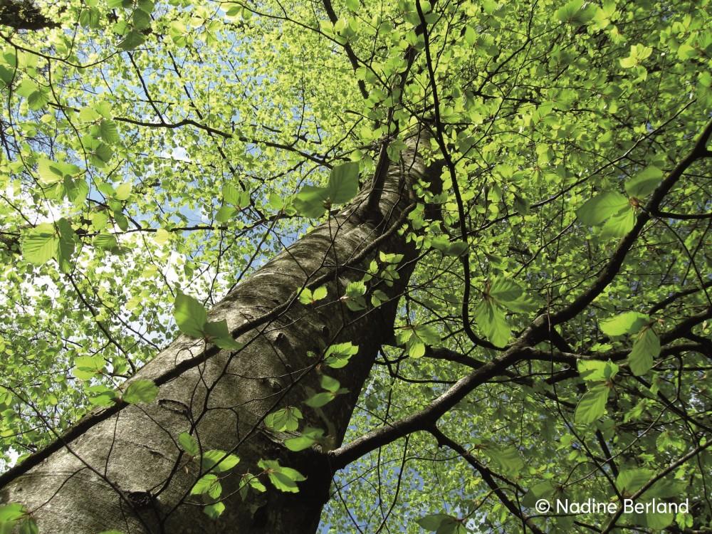 Soixante minutes dans la vie d'une forêt - © Reine Blanche